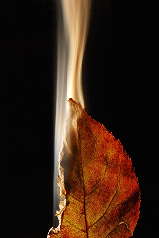 Burning Leaf 8