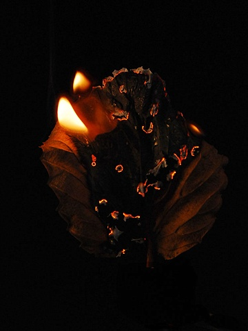Burning Leaf 5