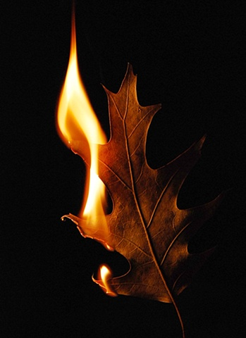 Burning Leaf 6