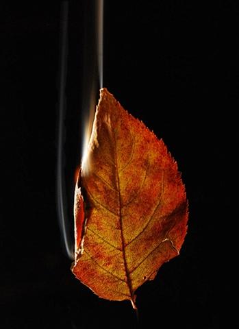 Burning Leaf 7