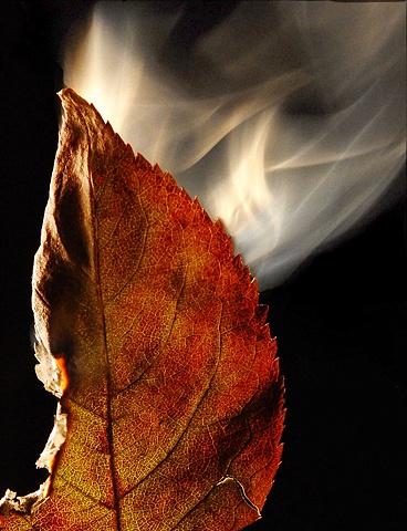 Burning Leaf 9