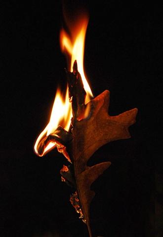 Burning Leaf 3