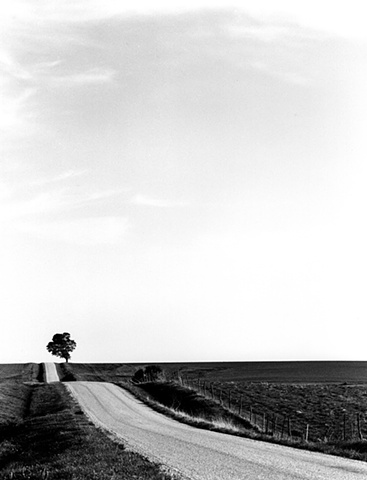County Road and Tree