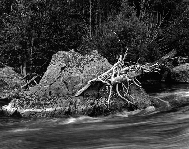 Taylor River Driftwood