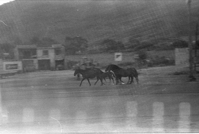 Chapala Mexico, Horses ( something happened with my film, sadly)
