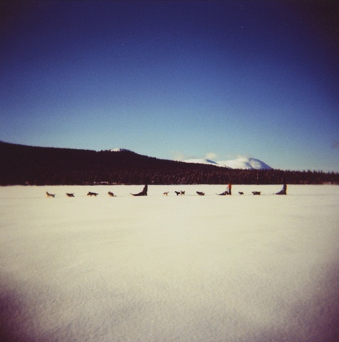 Dog Sled in Color