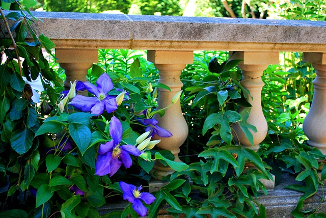 Purple Flowers and Columns