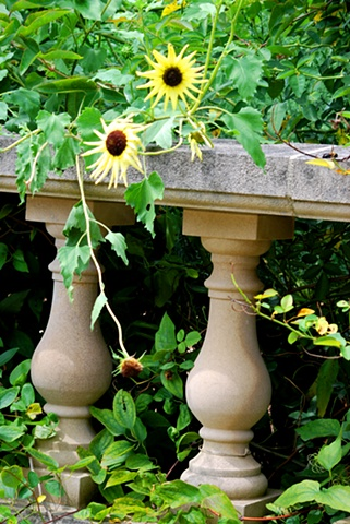 Yellow Flowers and Columns
