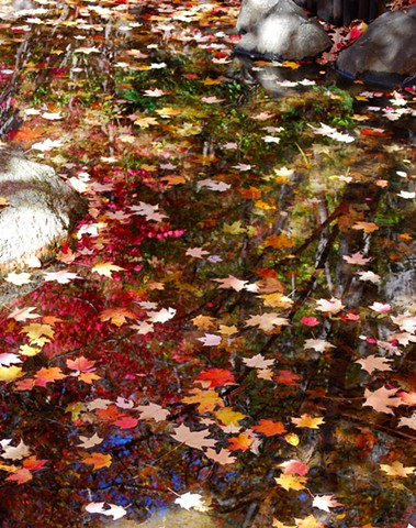 Leaves In Pond Reflections
