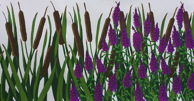 Purple Loosestrife Overtaking Cattails