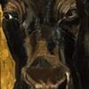 Black Nosed Black Cow