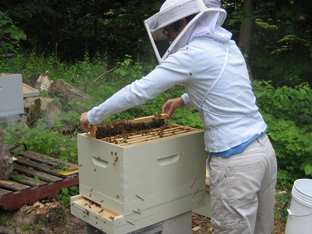 Deb working the hive.