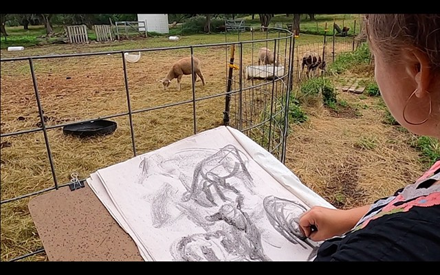 Gesture Drawing - Lambs on a Farm