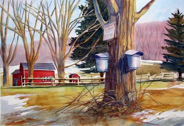 Sap Buckets and Barns