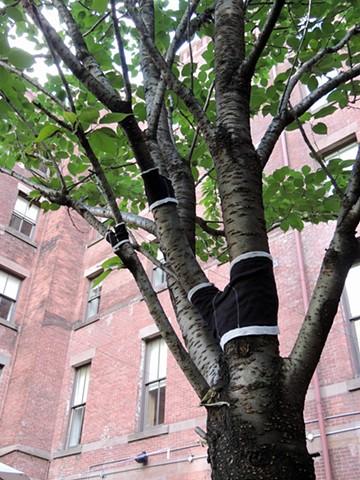 Boys Grow on Trees
