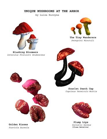 Mushrooms at Alice's Arbor