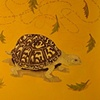 Turtle painting with words and leaves floating in air.