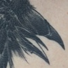 Baltimore Raven Detail