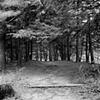 Allerton, Path