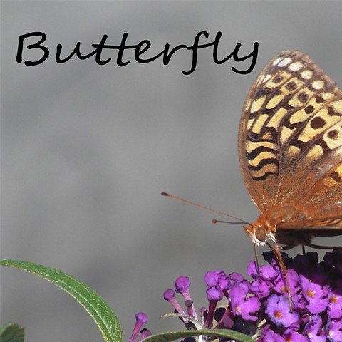 Butterfly Faunagraphs