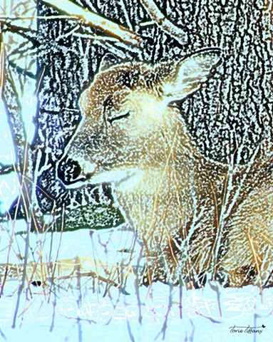 Faunagraphs art, animal art, nature art, deer art, fawn art, woodland art, photographic art, digital art, digital painting