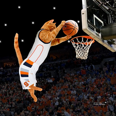 Comic art, Copy Cat art, cat art, animal art, basketball art, orange art, orange cat art, Syracuse Orange art, photographic art, word play art, digital art, unique art, digital painting