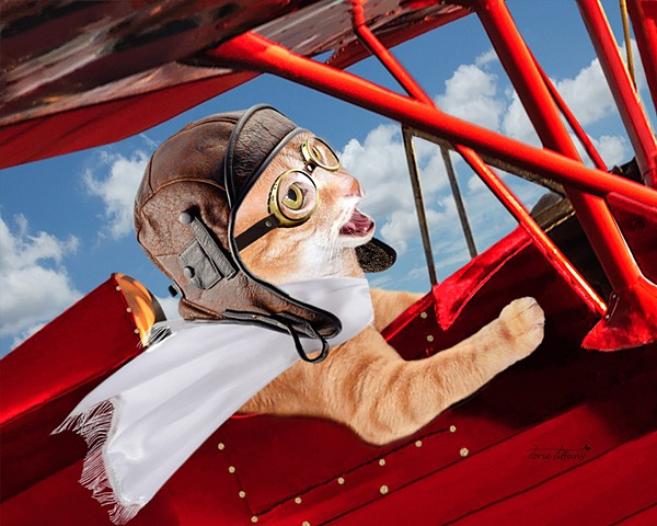 Comic art, Copy Cat art, cat art, animal art, pilot art, photographic art, word play art, digital art, unique art, digital painting
