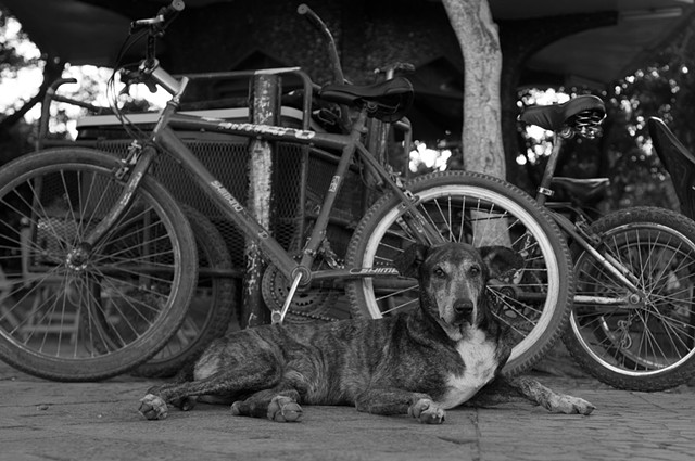 Dog with Bikes - Granada