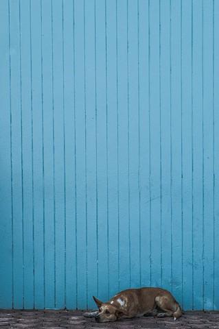 Perro Azul - Patillas