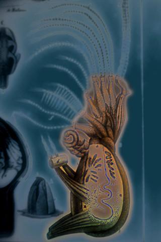 "Balanus (Sea Slug) 2019 zone plate photograph archival pigment print 20""x13""  from Lorenz Oken, ""Allgemeine Naturgeschichte V. Zoologie"" 1843"