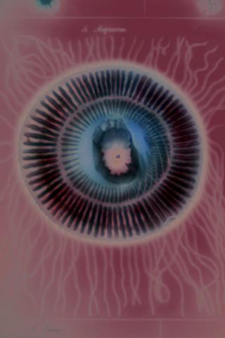 """Aequorea (Jellyfish) 2019 zone plate photograph archival pigment print 20""""x13""""  from Lorenz Oken, """"Allgemeine Naturgeschichte V. Zoologie"""" 1843"""