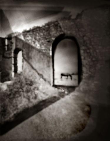 Horse, Wine Factory Ruins Samos, Greece