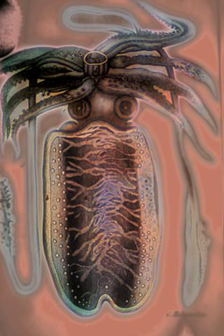 """Sepia (Squid) 2016-2019 zone plate photograph archival pigment print 20""""x13""""  from Lorenz Oken, """"Allgemeine Naturgeschichte V. Zoologie"""" 1843"""