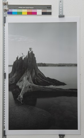 """The Stump, Grand Lake Stream, Maine"""
