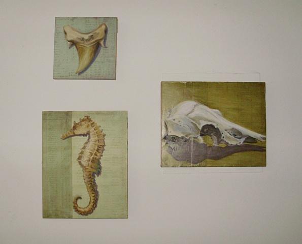 Shark tooth, Seahorse, Skull