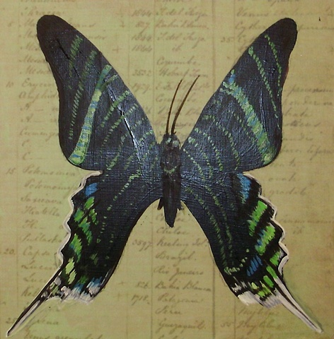 Black Thecla Butterfly