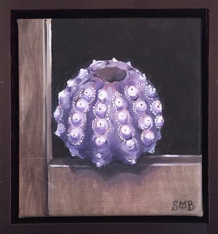 Prized Specimen: Sutnick Urchin
