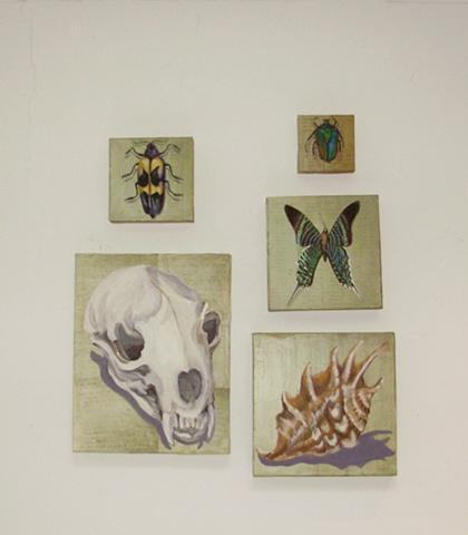 Scarab Beetle, Longhorn Beetle, Thecla Butterfly, Spider Shell, Mink Skull