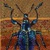 Rare Beetle