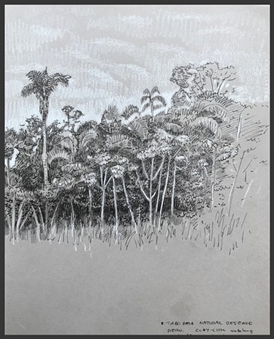 Travel Drawing: Tambopata River, Peru