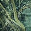Tree, Coxley Woods.