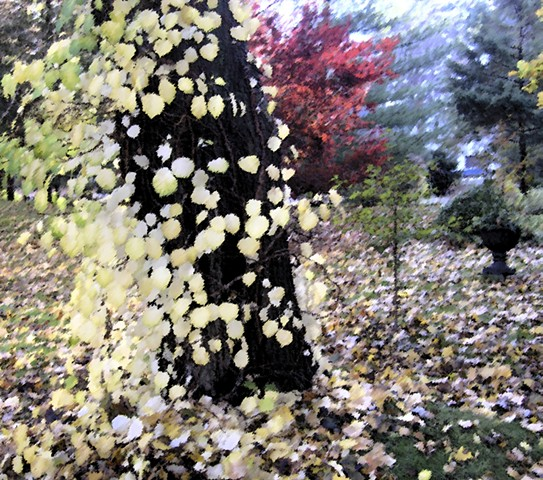 Bride Undone, Fall Glory, Fall Wind, Poetry of Photography, Imaginative Photography