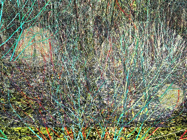 Canadian Pollock, Digital Pollock, Abstracted Shrubs, bushes, colour riot, Circles