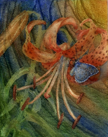 orange Tiger Lily, blue butterfly, watercolor