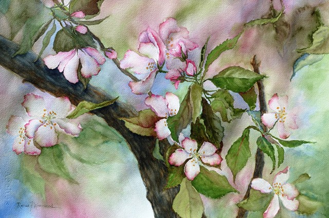 Loosely painted watercolor of apple blossoms