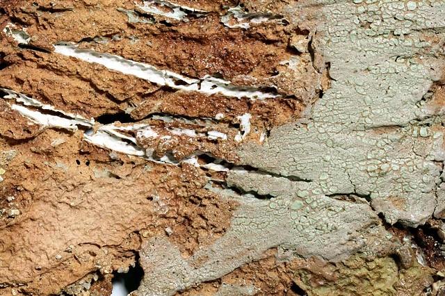 Surface Study- erosion (detail)