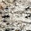 Surface Study- salt-fired (detail 1)