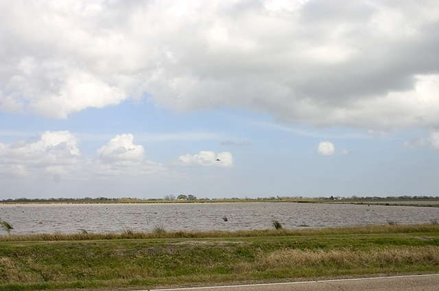 RICE FIELDS, PECAN ISLAND, LOUISIANA, 2008