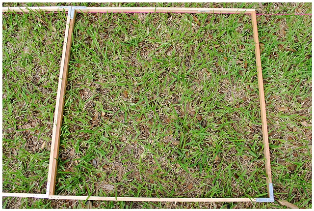 Planting Into the Grid, 2009 Row 2, Image 20, July 24, 2010