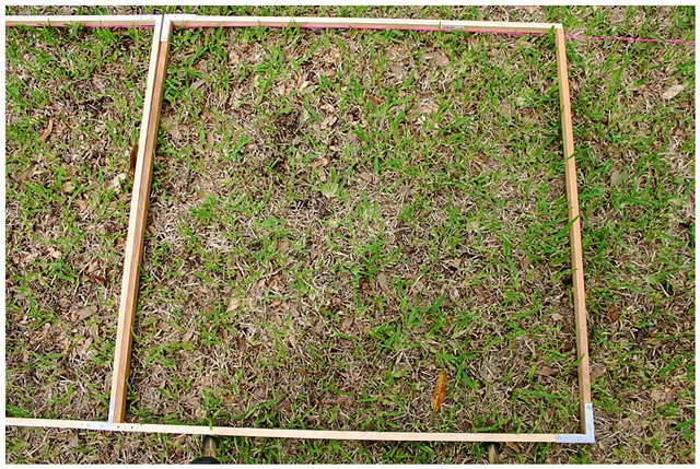 Planting Into the Grid, 2009 Row 2, Image 35, July 24, 2010